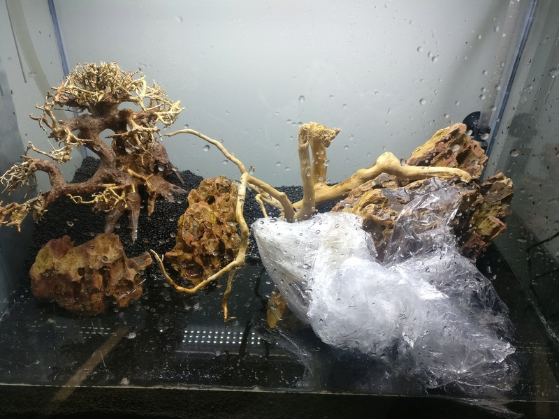 [Projet] Aquascaping Img_2050