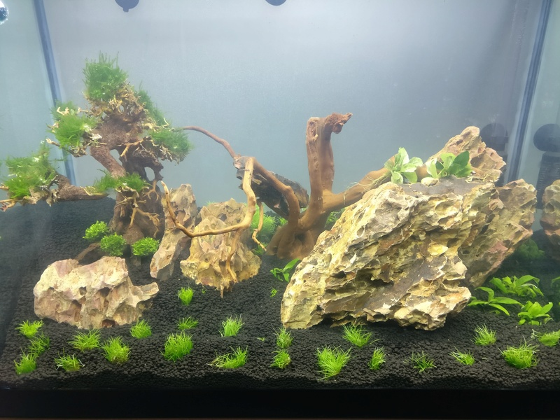 [Projet] Aquascaping Img_2055
