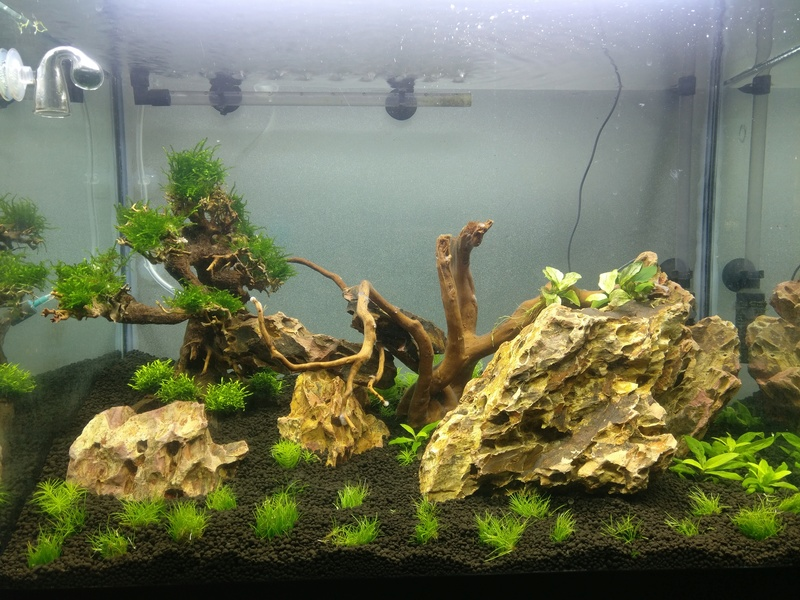 [Projet] Aquascaping Img_2057