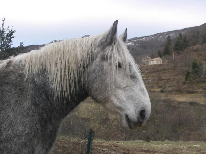 OLGA - Trait percheron née en 2002 - adoptée en février 2009 par patricia42 - Page 3 100_1529