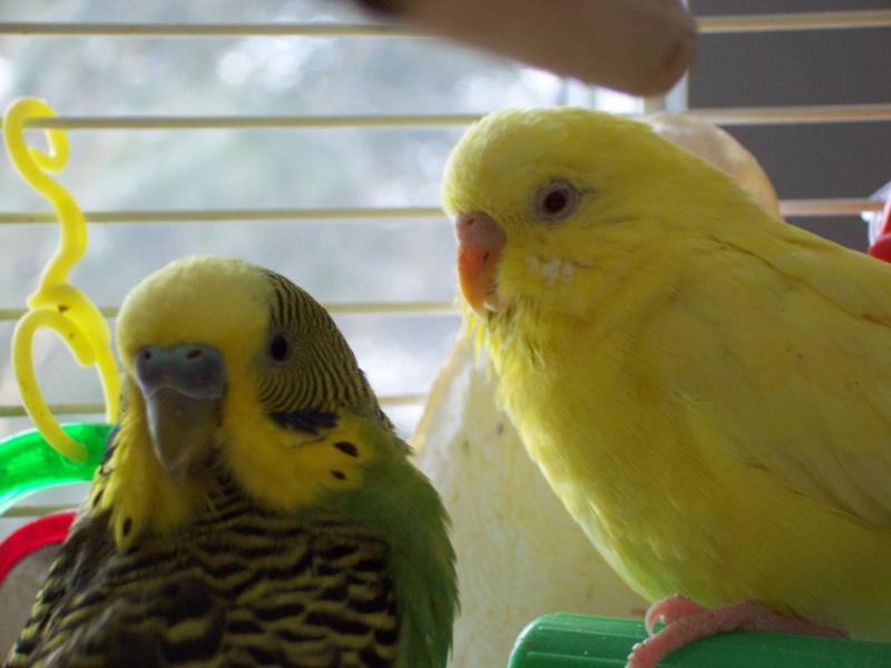 voici toutite et roco!!!! Photo_63
