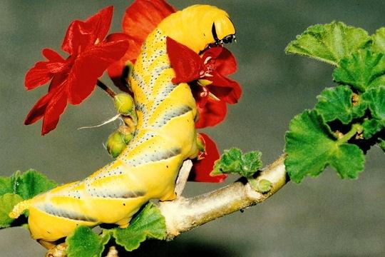 Les 100 plus belles photos animalières de l'année Chenil11