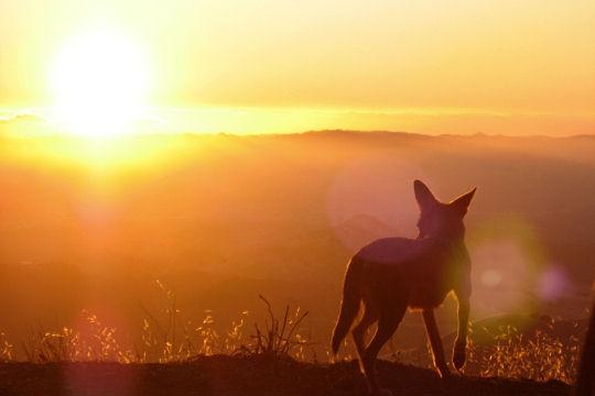 Les 100 plus belles photos animalières de l'année Coyote10