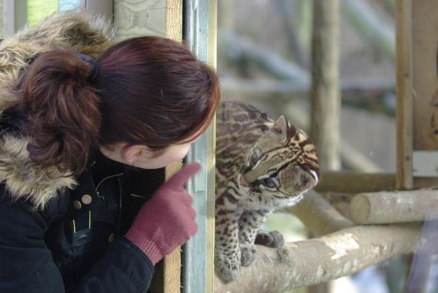 Nous et les félins en parc zoologique Imgp1011