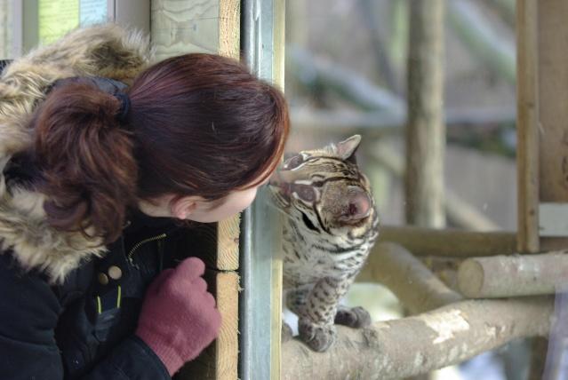 Nous et les félins en parc zoologique Imgp1012