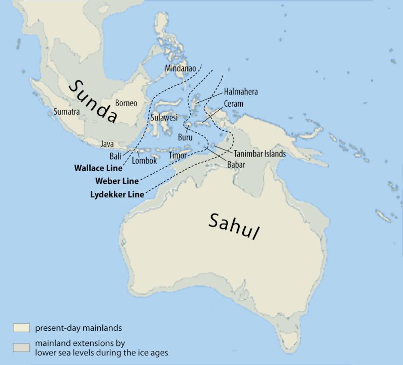 PANTHERE NEBULEUSE DE BORNEO - Neofelis diardi Map_of10