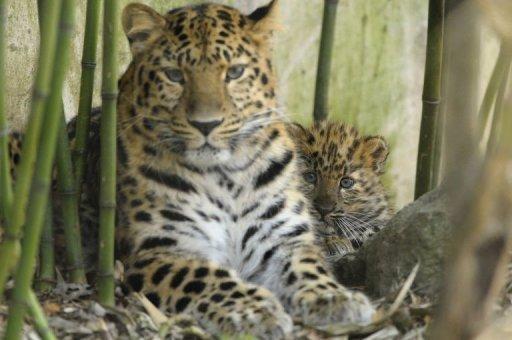 Actu dans les zoos Photo_27