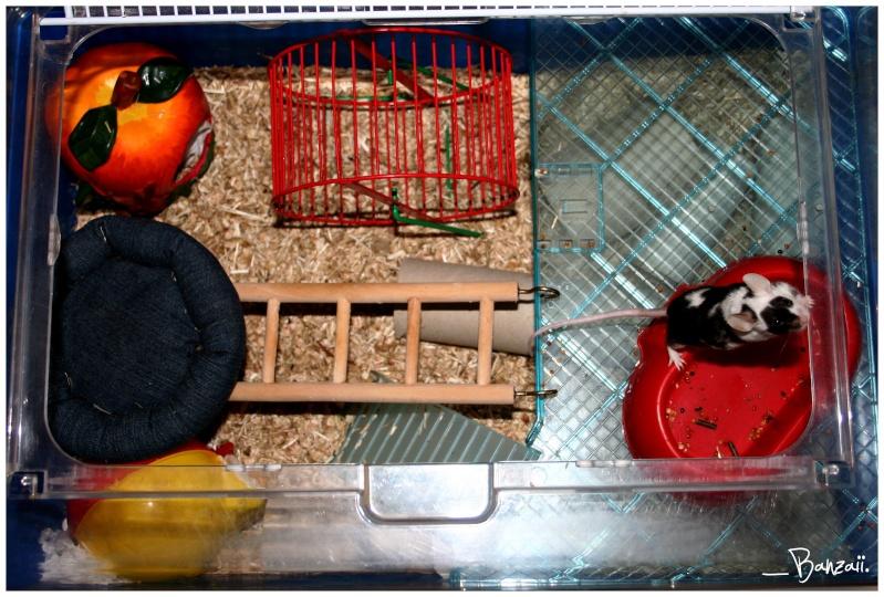 Vos cages : les photos [PAS DE COMMENTAIRES] - Page 3 Pix__c20