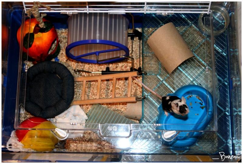 Vos cages : les photos [PAS DE COMMENTAIRES] - Page 3 Pix__c26