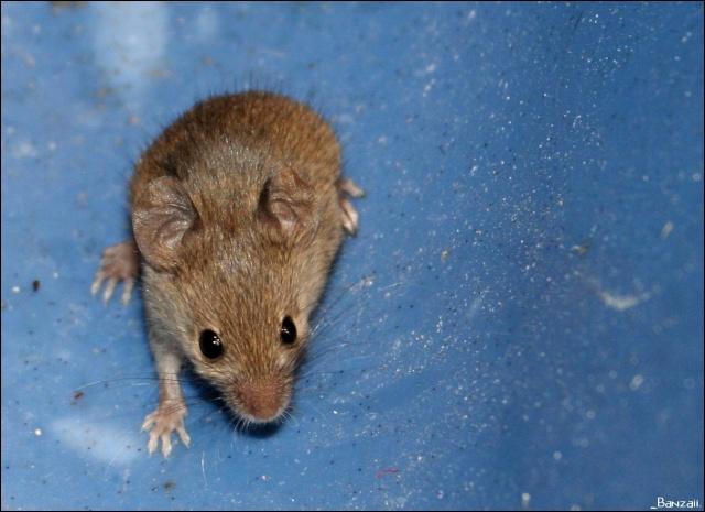 Rats & Ratons domestiques en pleine avenue - Page 36 Pix_eo51