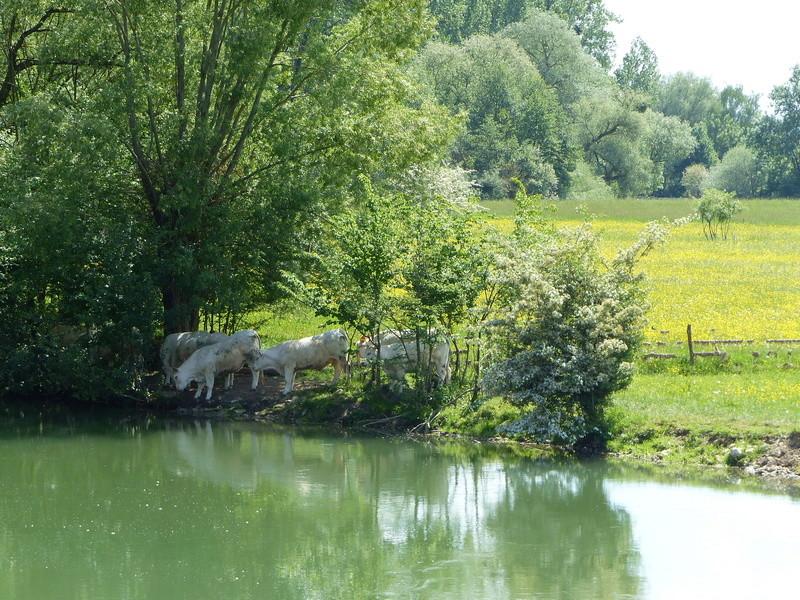 La Meuse comme vous ne l'avez jamais vue P1070245