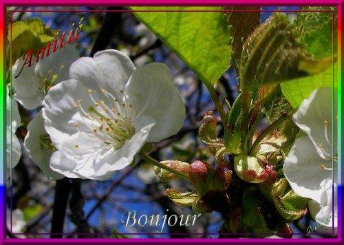 LUNDI 09 AVRIL 2018 Saint GAUTHIER 09032410