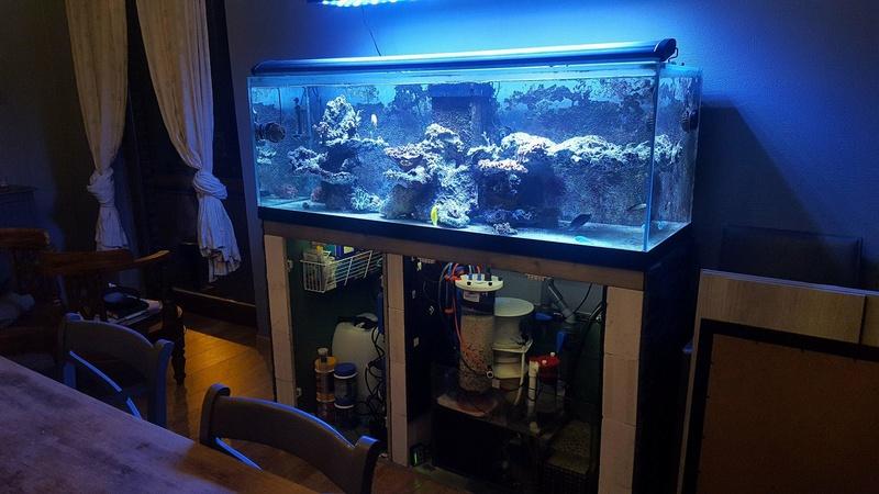 Aquareef 425L [Récifal] 26512911