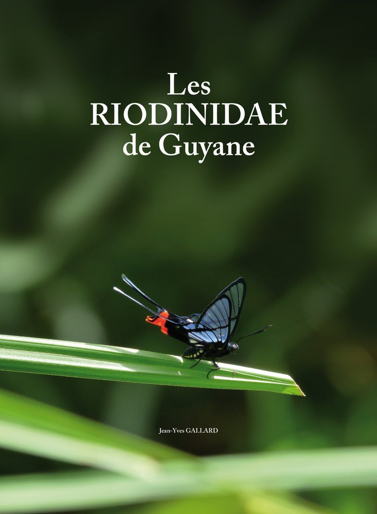 Les Riodinidae de Guyane - NOUVEAU Couver10