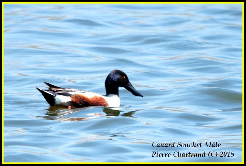 Escapade à Baie DuFevbre Canard32