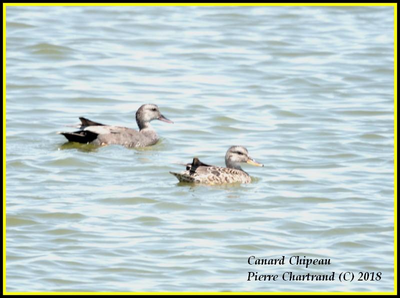 Escapade à Baie DuFevbre Canard33