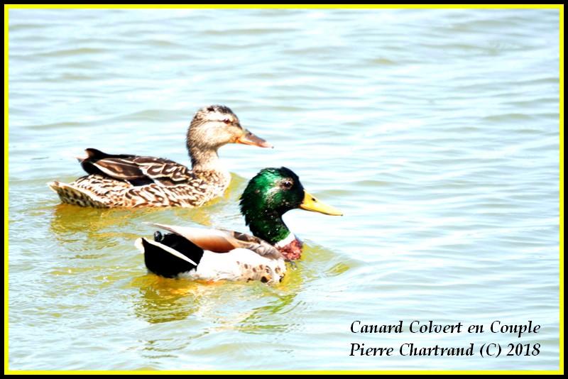 Escapade à Baie DuFevbre Canard34