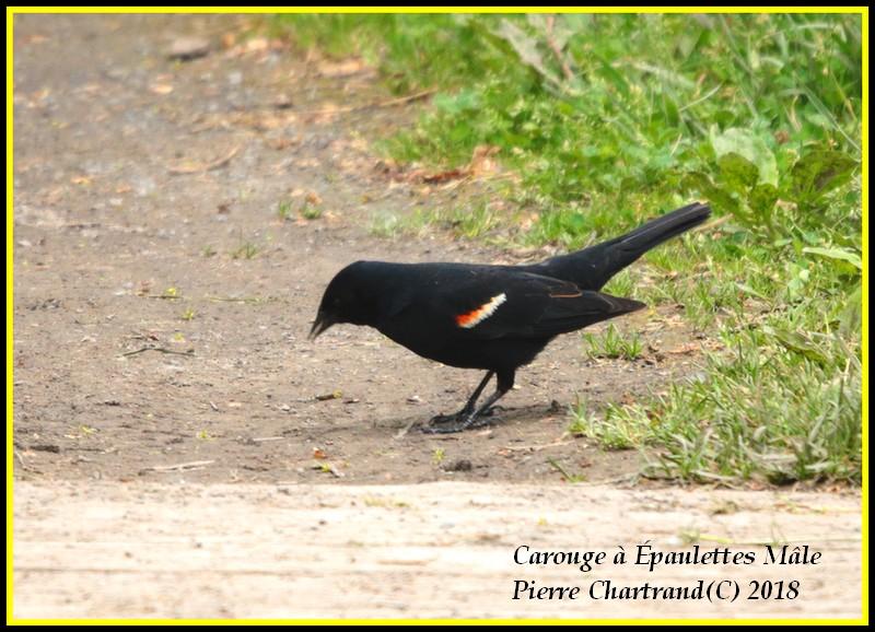 Ce Midi Parc Nature Pointe Aux Prairies Caroug23