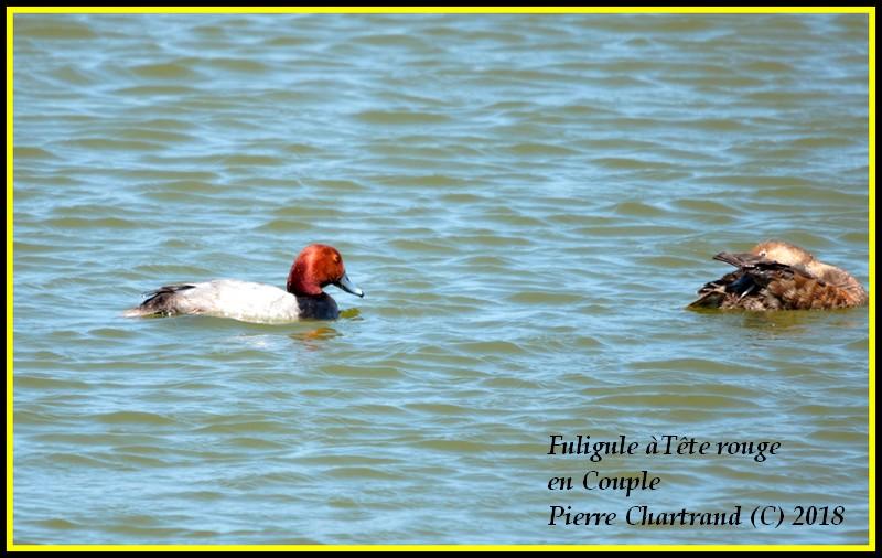 Escapade à Baie DuFevbre Fuligu10