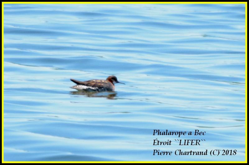 Escapade à Baie DuFevbre Phalar10
