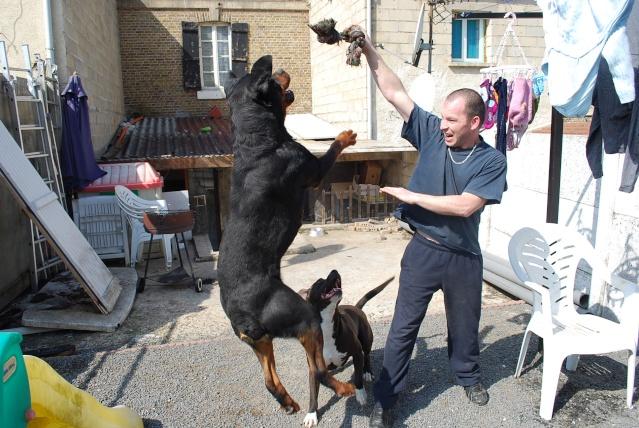 Présentation  de mes chiens - Page 2 Dsc_4914