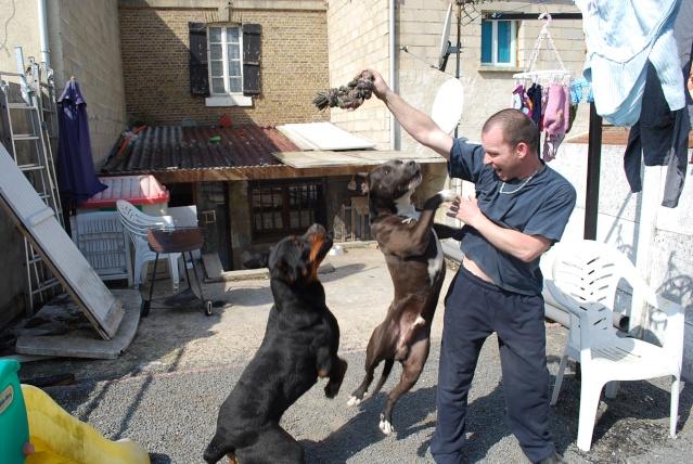 Présentation  de mes chiens - Page 2 Dsc_4916