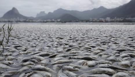 Mort mystérieuse de tonnes de poissons dans un lac de Rio Media_19