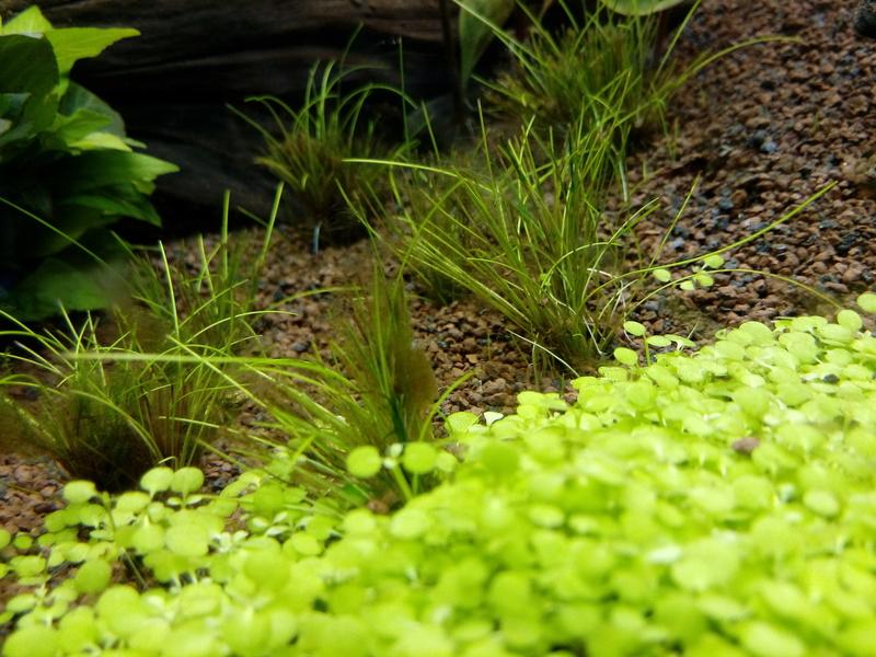 Algues brunes Img_2021