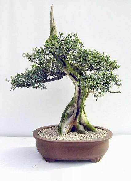 la partie la plus importante du bonsai 390ole10