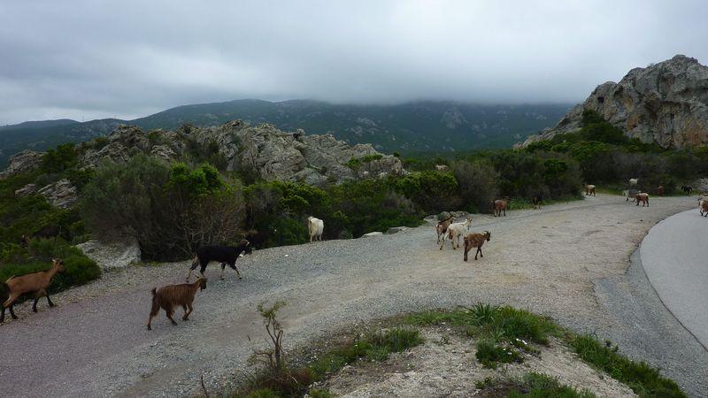 Photos Corse mai 2018 2018_c85