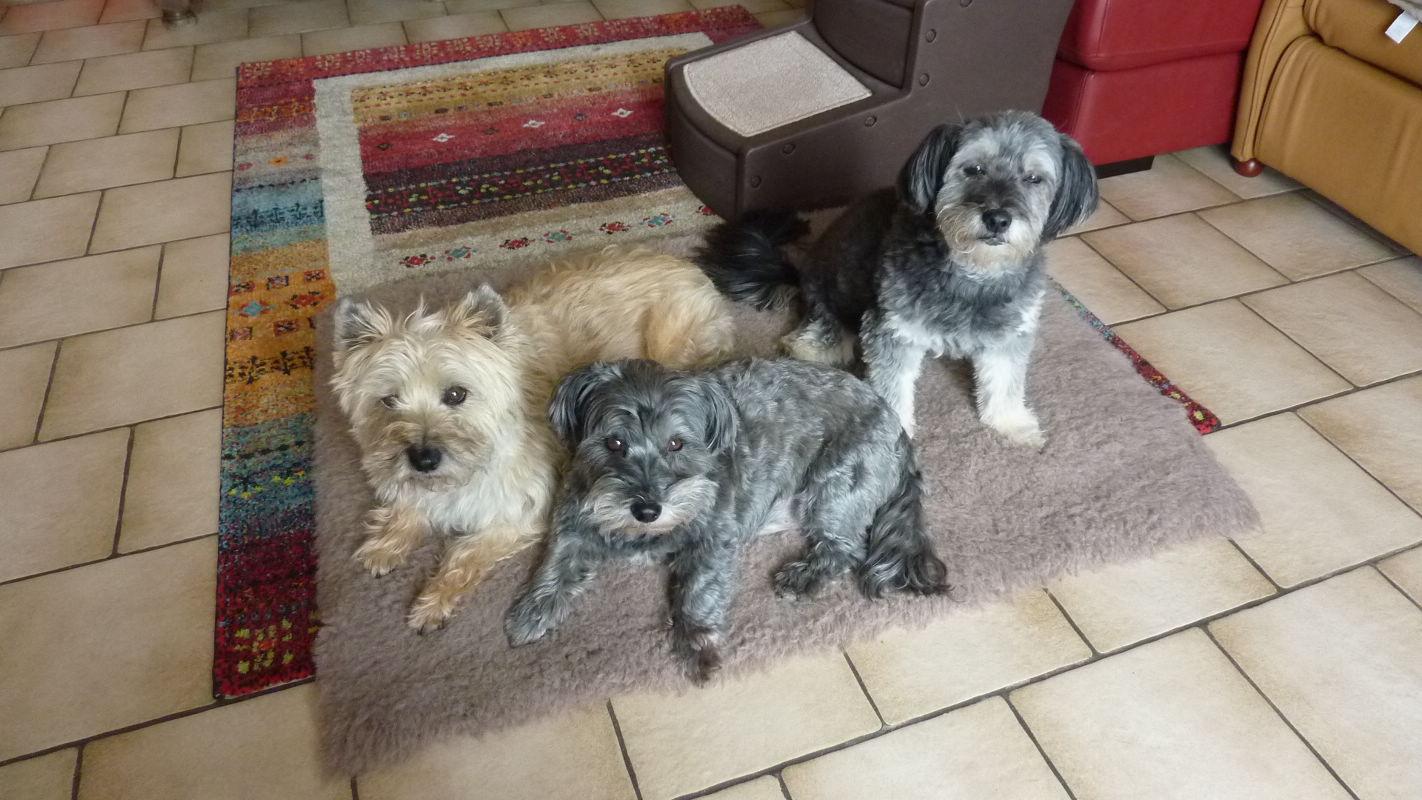 Des nouvelles de Jade, Pilou et leur soeurette Alix Alix_p10