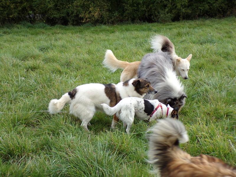 LINDA - chienne croisée de petite taille, née environ en juillet 2014. Joueuse et amicale (Pascani) - adoptée par Delphine (18) 100_0111
