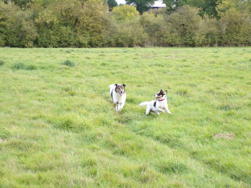 LINDA - chienne croisée de petite taille, née environ en juillet 2014. Joueuse et amicale (Pascani) - adoptée par Delphine (18) 100_0214