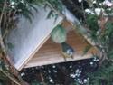 Les oiseaux de nos jardins - Page 2 Oiseau10
