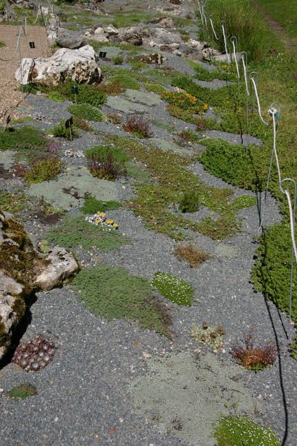 Foire aux plantules SAJA 30/05/09 - Page 2 Img_7615
