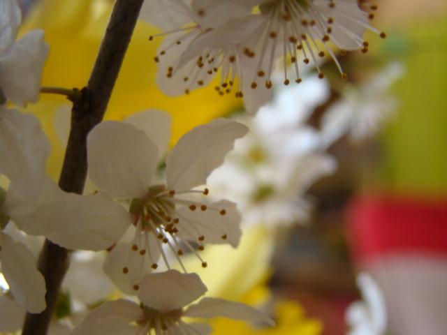 floraisons macro - Page 2 Dsc05911