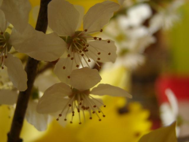 floraisons macro - Page 2 Dsc05913