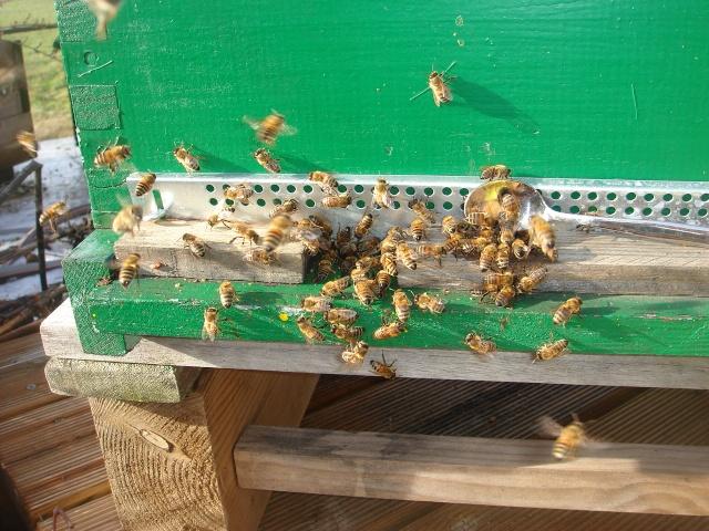 HELP!!!!une ruche sur un toit...........la saga! - Page 2 Zaza_011