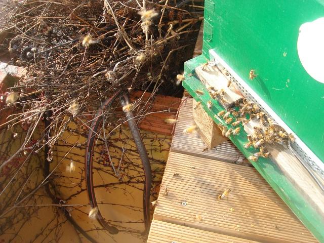 HELP!!!!une ruche sur un toit...........la saga! - Page 2 Zaza_012
