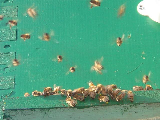 HELP!!!!une ruche sur un toit...........la saga! - Page 2 Zaza_013