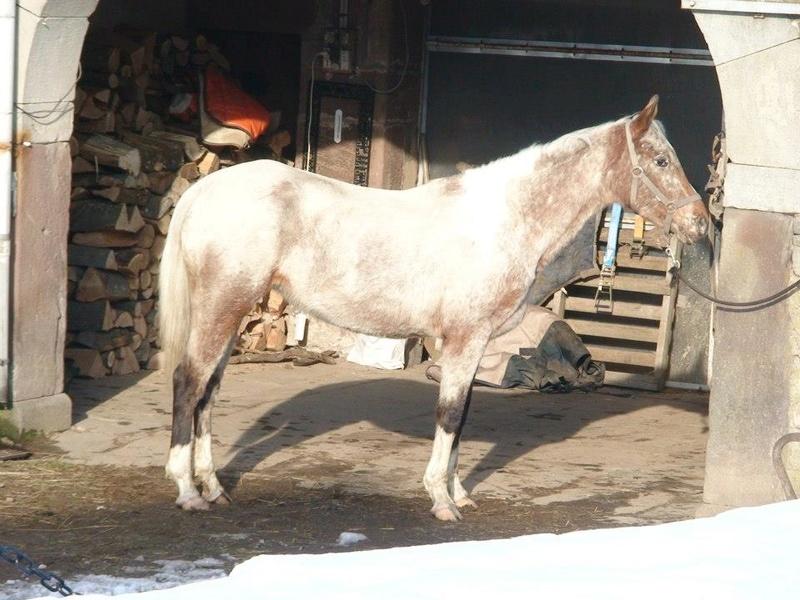 La licorne à tâches :) 62562010