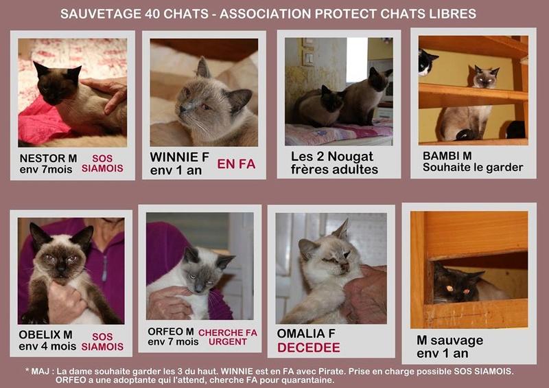 Enorme SOS pour une quarantaine de chats en Bretagne 46921910