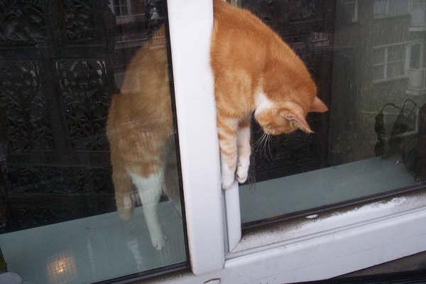 Systèmes de protection pour vos chats Oscill10