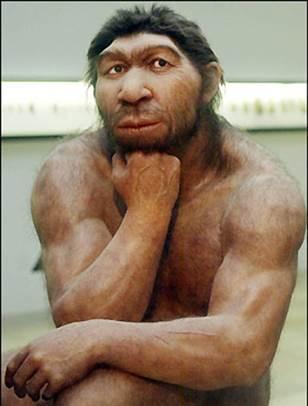 Des mini cerveaux de Néandertal poussent en laboratoire Neande10