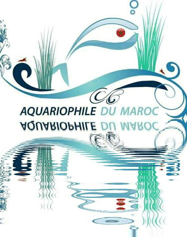 Forum Aquariophile du Maroc