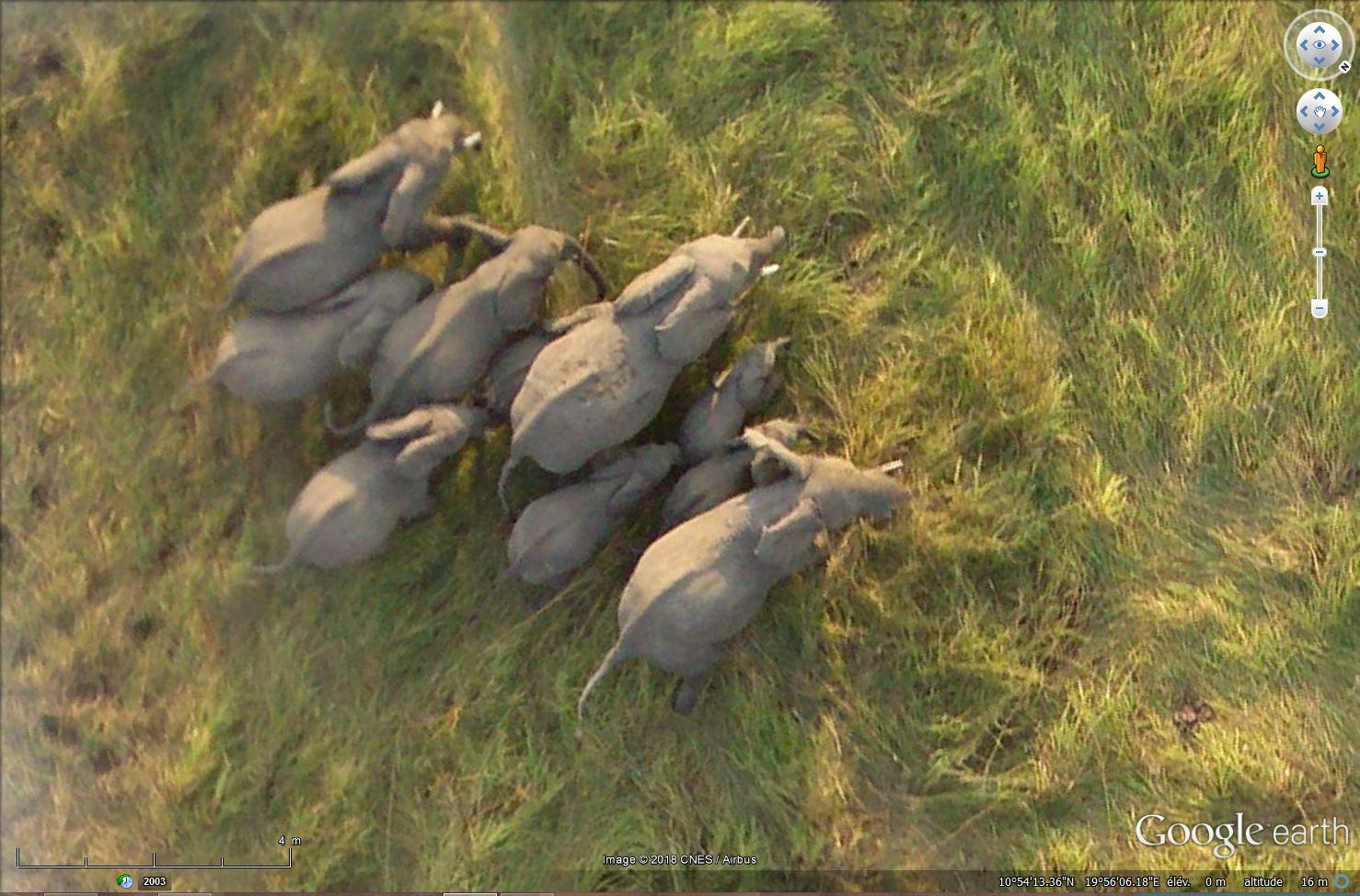 En Afrique avec le National Geographic Magazine - Page 12 Tsge_564