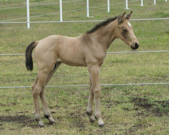 KIND HOPE DES LYS - naissance le 19 juin 2010 26072_10
