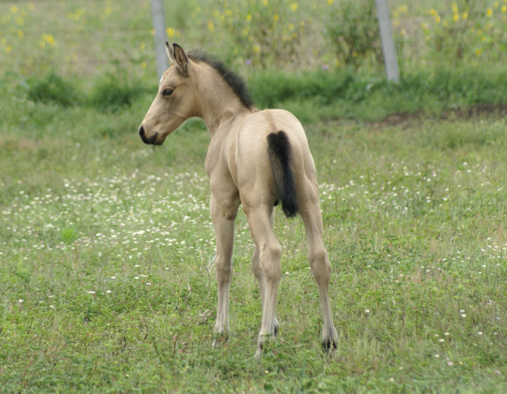 KIND HOPE DES LYS - naissance le 19 juin 2010 26072_11