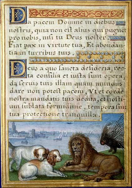 Le lion Lion1010