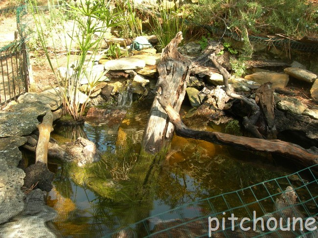 notre bassin pour tortues... - Page 2 Le_bas10